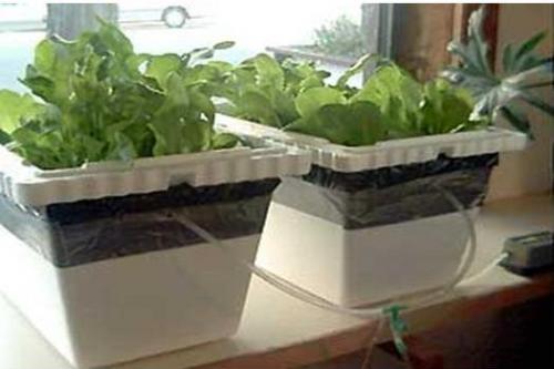 Coltivazione idroponica breve guida orto di casa mia - Coltivazione idroponica in casa ...